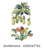 set of carnivorous plants ...   Shutterstock .eps vector #1056267761