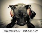 black bull terrier with... | Shutterstock . vector #105631469