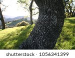nature background with green... | Shutterstock . vector #1056341399