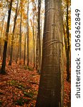 golden autumn in beech wood.... | Shutterstock . vector #1056362849