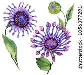 beautiful purple osteospermum ... | Shutterstock . vector #1056377291
