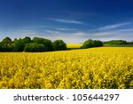 Yellow Oilseed Rape Field Under ...