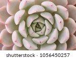 Detail Focus Soft Pink Rosette...