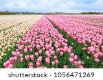 spring in amsterdam. vivid... | Shutterstock . vector #1056471269