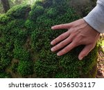 Moss On Stone In The Woods  Th...