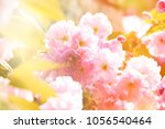 spring background with... | Shutterstock . vector #1056540464