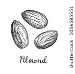 ink sketch of almond. hand... | Shutterstock .eps vector #1056585551
