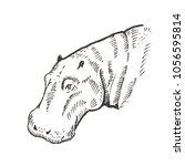 hand drawn hippo   hippopotamus ... | Shutterstock .eps vector #1056595814