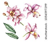 set of orchids. hand draw... | Shutterstock . vector #1056597299
