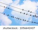 Many Pigeons On The Wire...