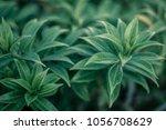 beatiful green leaves | Shutterstock . vector #1056708629