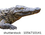 crocodile isolated on the white ... | Shutterstock . vector #1056710141