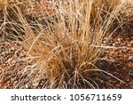 artificial hay like plant... | Shutterstock . vector #1056711659