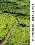 tea plantations in kerala | Shutterstock . vector #1056717995
