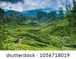 tea plantations in kerala | Shutterstock . vector #1056718019