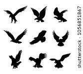 Eagle Falcon Bird Hawk Animal...
