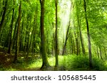 forest trees. nature green wood ... | Shutterstock . vector #105685445