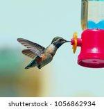 Hummingbird Next To Bird Feede...