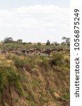 herd of herbivores on the steep ... | Shutterstock . vector #1056875249