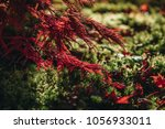 red maple leave fall in the... | Shutterstock . vector #1056933011