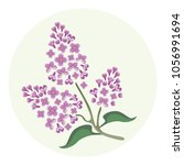vector blooming lilac flowers... | Shutterstock .eps vector #1056991694