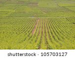 vineyards near to the town of... | Shutterstock . vector #105703127