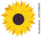 sunflower with seeds vector... | Shutterstock .eps vector #1057058045