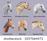 set of portraits of horses and... | Shutterstock .eps vector #1057064471
