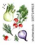 fennel  radish  rosemary  red... | Shutterstock . vector #1057149815