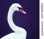 Closeup Of A Graceful White...