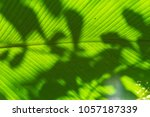big green pin stripe leaf of... | Shutterstock . vector #1057187339