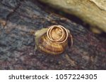 snail on stone with wedding... | Shutterstock . vector #1057224305