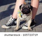 Stock photo owner walks his dog 105723719