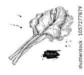 rhubarb vector drawing set.... | Shutterstock .eps vector #1057277879