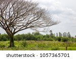 dried tree and the cloud in sky | Shutterstock . vector #1057365701