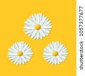 chamomile flower  vector icon.   Shutterstock .eps vector #1057377677