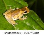 short headed treefrog ... | Shutterstock . vector #105740885