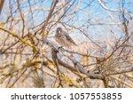 gray warbler finch certhidea... | Shutterstock . vector #1057553855