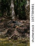 crocodile on bank | Shutterstock . vector #1057584881