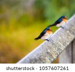 two dainty delightful  little... | Shutterstock . vector #1057607261