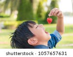 boy is eating red strawberry in ... | Shutterstock . vector #1057657631