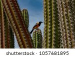 image of the colorful bird the... | Shutterstock . vector #1057681895