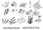 herbs and medicinal plants... | Shutterstock .eps vector #1057691741