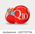 coenzyme q10 and heart.... | Shutterstock .eps vector #1057737704