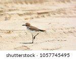 A Little Bird Stands On The...