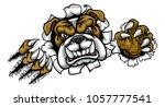a mean bulldog dog angry animal ...   Shutterstock . vector #1057777541