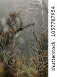 a spiders web catches dew from... | Shutterstock . vector #1057787954