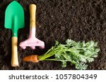garden tools and carrot on the... | Shutterstock . vector #1057804349