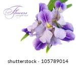 A Beautiful Blue Iris Flower On ...