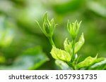 the selective focus on the... | Shutterstock . vector #1057931735